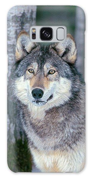 Forest Wolf Galaxy Case
