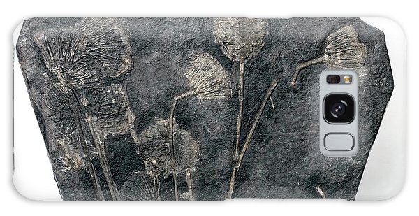 Sea Lily Galaxy Case - Fossil Crinoids by Pascal Goetgheluck/science Photo Library