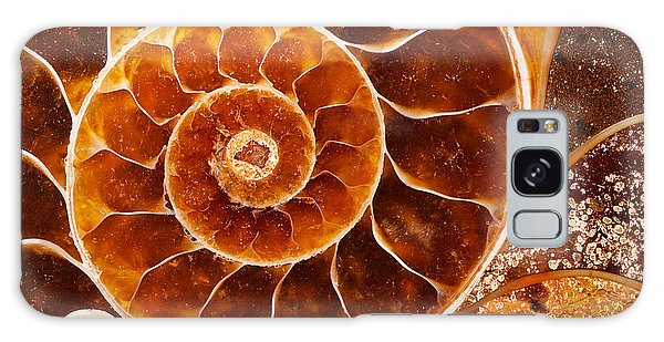 Fossil Nautilus Galaxy Case by Alice Cahill