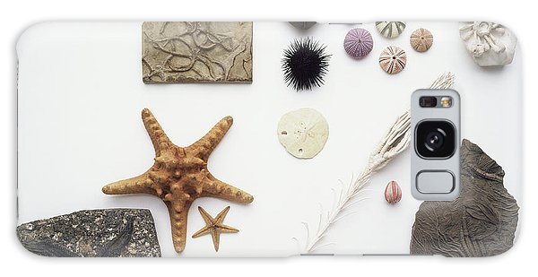 Sea Lily Galaxy Case - Fossilised And Modern Echinoderms by Dorling Kindersley/uig