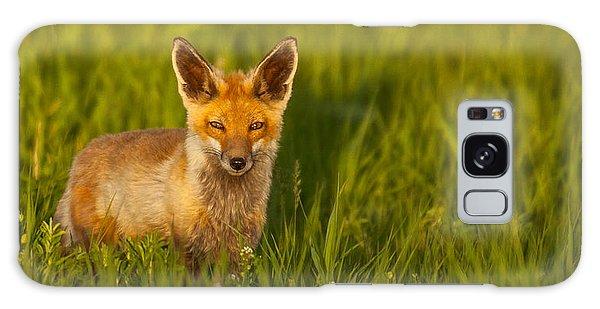 Fox In Grass  Galaxy Case