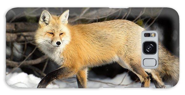 Fox On A Stroll Galaxy Case