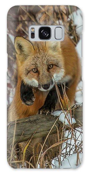 Fox Trot Galaxy Case