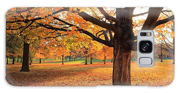 Francis Park Autumn Maple Galaxy Case by Scott Rackers