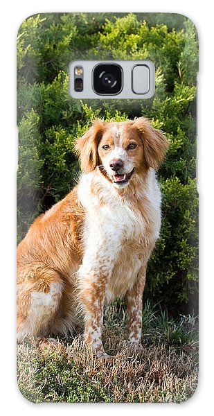 French Brittany Spaniel Galaxy Case