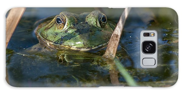 Frog Eyes Galaxy Case