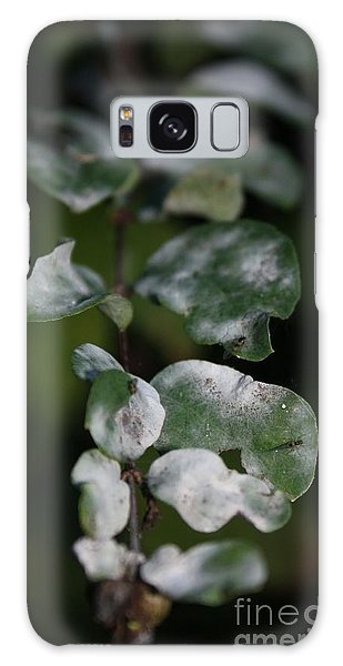 Frost Coloured Leaves Galaxy Case by Amanda Holmes Tzafrir
