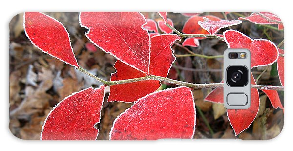 Frosted Blueberry Leaves Galaxy Case