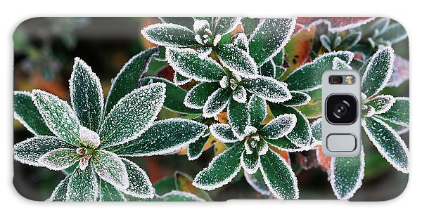Cold Day Galaxy Case - Frosted Leaves, Close-up (large Format by Stuart Westmorland