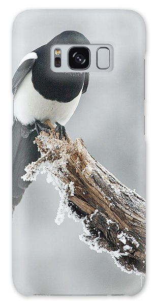 Frosted Magpie Galaxy Case by Tim Grams