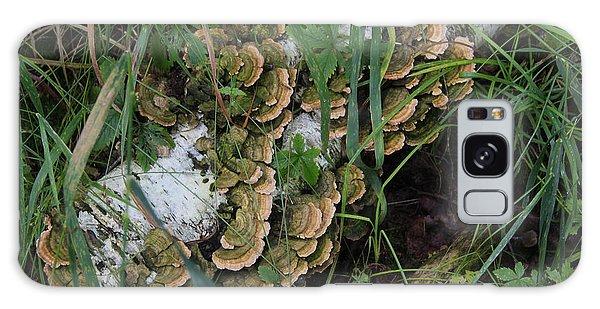 Fungus On The Birch Log Galaxy Case