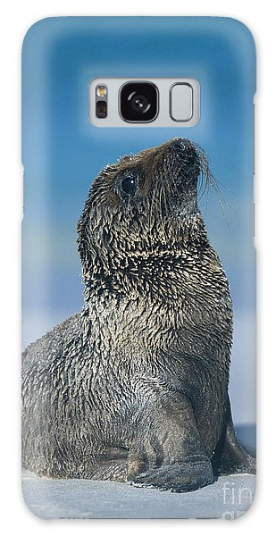 Galapagos Sea Lion Galaxy Case