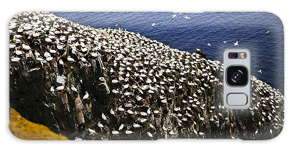 Hundred Galaxy Case - Gannets At Cape St. Mary's Ecological Bird Sanctuary by Elena Elisseeva