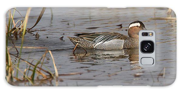 Garganey In Wisconsin Galaxy Case