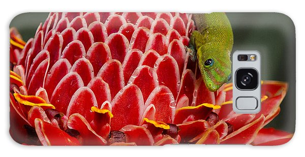 Gecko On Red Ginger Galaxy Case