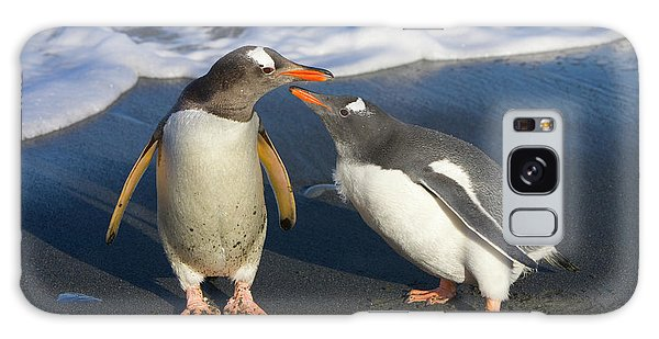 Gentoo Penguin Chick Begging For Food Galaxy Case