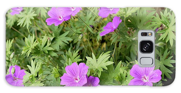 Hybrid Galaxy Case - Geranium 'wisley Hybrid' by Anthony Cooper/science Photo Library