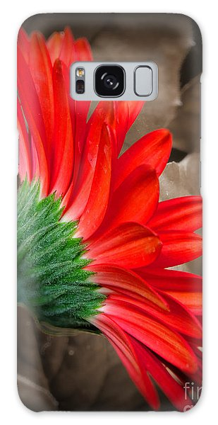 Gerber Daisy Bashful Red Galaxy Case