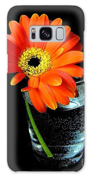 Gerbera Daisy In Glass Of Water Galaxy Case by Nina Ficur Feenan