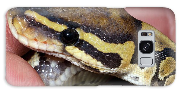 Ghost Royal Python Or Ball Python Galaxy Case by Nigel Downer