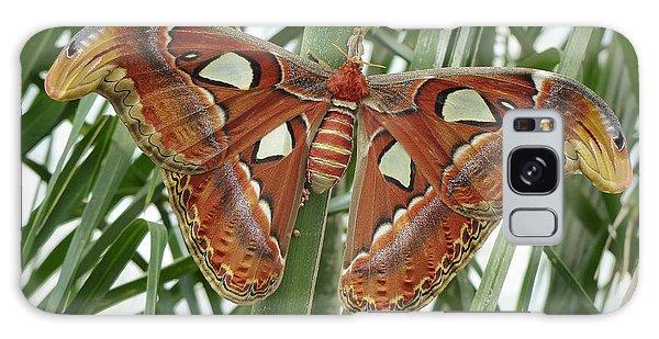 Giant Atlas Moth Galaxy Case by Cindy McDaniel