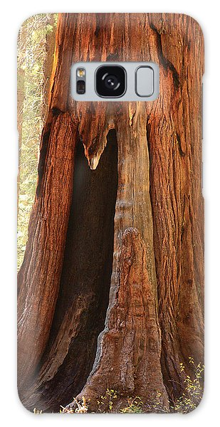 Giant Forest Sequoia Tree Galaxy Case