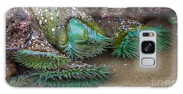 Giant Green Anemone Galaxy Case