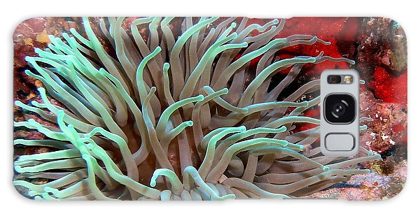 Giant Green Sea Anemone Against Red Coral Galaxy Case