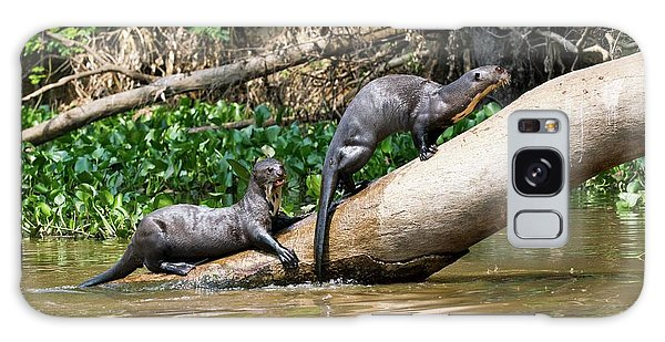 River Otter Galaxy Case - Giant Otters by John Devries/science Photo Library