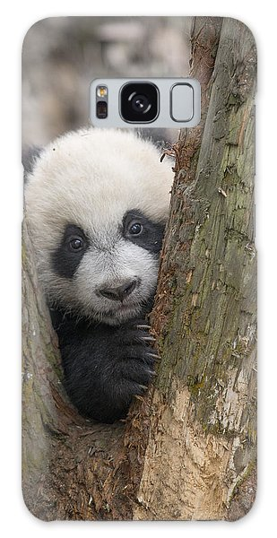 Galaxy Case featuring the photograph Giant Panda Cub Bifengxia Panda Base by Katherine Feng