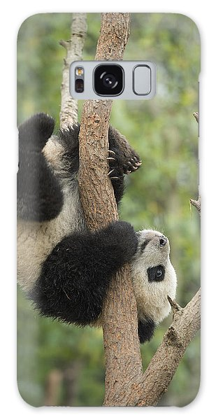 Giant Panda Cub In Tree Chengdu Sichuan Galaxy Case
