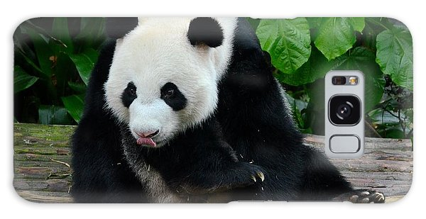 Giant Panda With Tongue Touching Nose At River Safari Zoo Singapore Galaxy Case