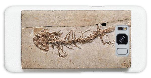 Salamanders Galaxy Case - Giant Salamander Fossil by Dorling Kindersley/uig