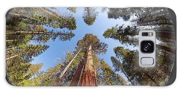 Giant Sequoia Fisheye Galaxy Case