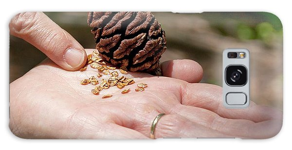 Calavera Galaxy Case - Giant Sequoia Seeds by Quincy Russell, Mona Lisa Production/science Photo Library