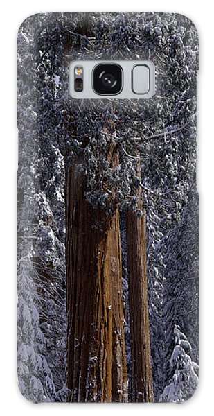 Kings Canyon Galaxy Case - Giant Sequoia Tree Covered In Fresh by Greg Probst