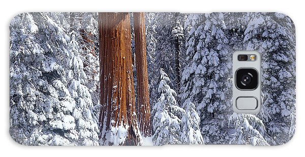Kings Canyon Galaxy Case - Giant Sequoia Trees Sequoiadendron by Panoramic Images