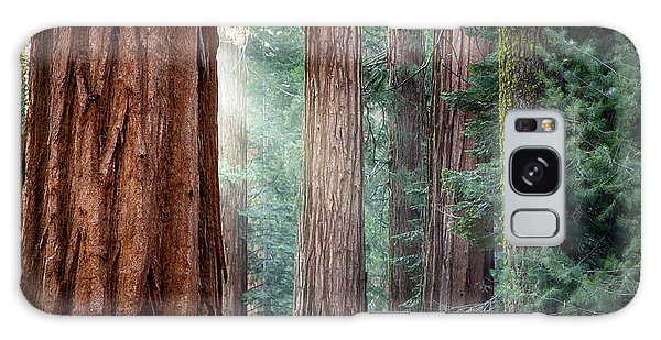 Pine Branch Galaxy Case - Giant Sequoias In Early Morning Light by Jane Rix