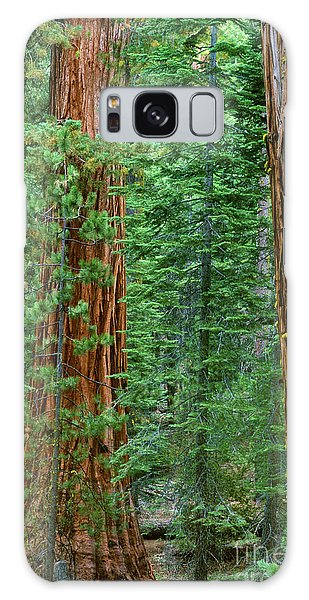 Giant Sequoias Sequoiadendron Gigantium Yosemite Np Ca Galaxy Case by Dave Welling