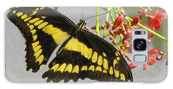 Giant Swallowtail Galaxy Case