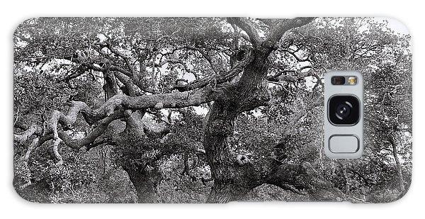 Gnarly Tree  Galaxy Case