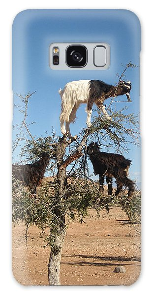 Goats In A Tree Galaxy Case