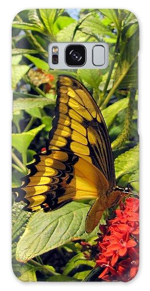 Gold Giant Swallowtail Galaxy Case by Jennifer Wheatley Wolf