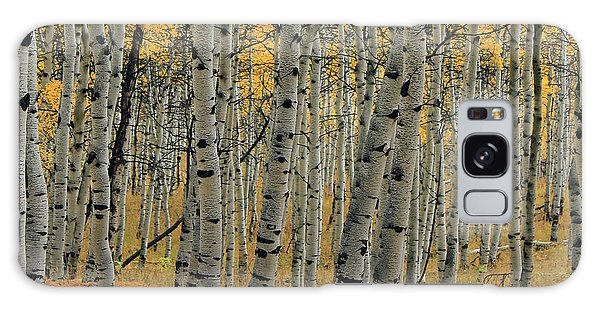 Golden Aspen Forest Galaxy Case