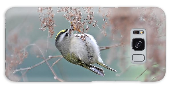 Golden Crowned Kinglet And Oceanspray Galaxy Case by Peggy Collins