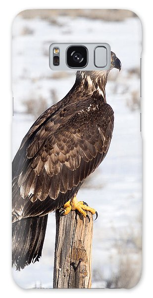 Golden Eagle On Fencepost Galaxy Case