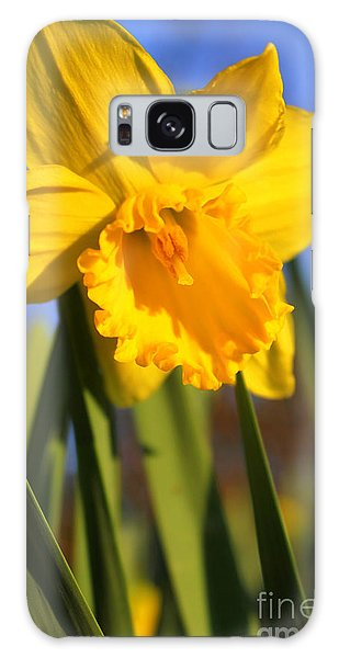 Golden Glory Daffodil Galaxy Case by Kathy  White