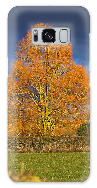 Golden Glow - Sunlit Tree Galaxy Case