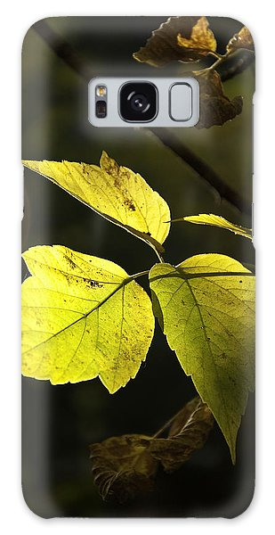 Golden Leaves Galaxy Case by Craig T Burgwardt