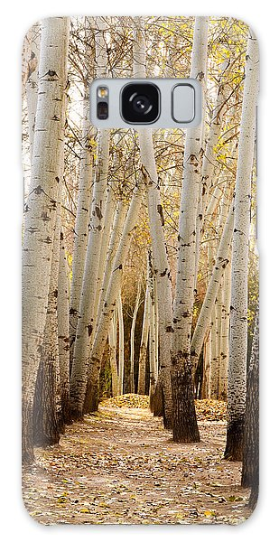 Golden Trees Dunhuang China Galaxy Case